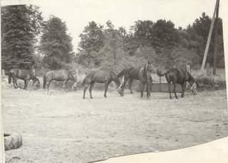 Ranczo zorganizowane w miejscowości Zwierzyniec koło Panek - wakacje 1974 r.