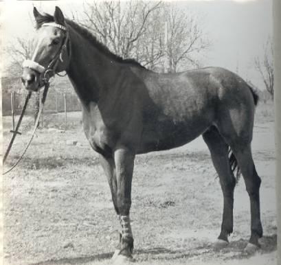 Sportowy koń Spryt