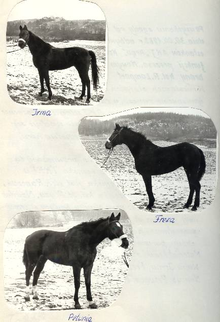1982 rok. Konie Irma, Freza, Petunia