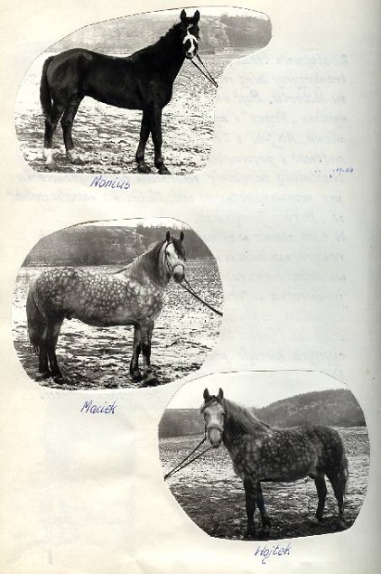 1982 rok. Konie Nonius, Maciek i Wojtek