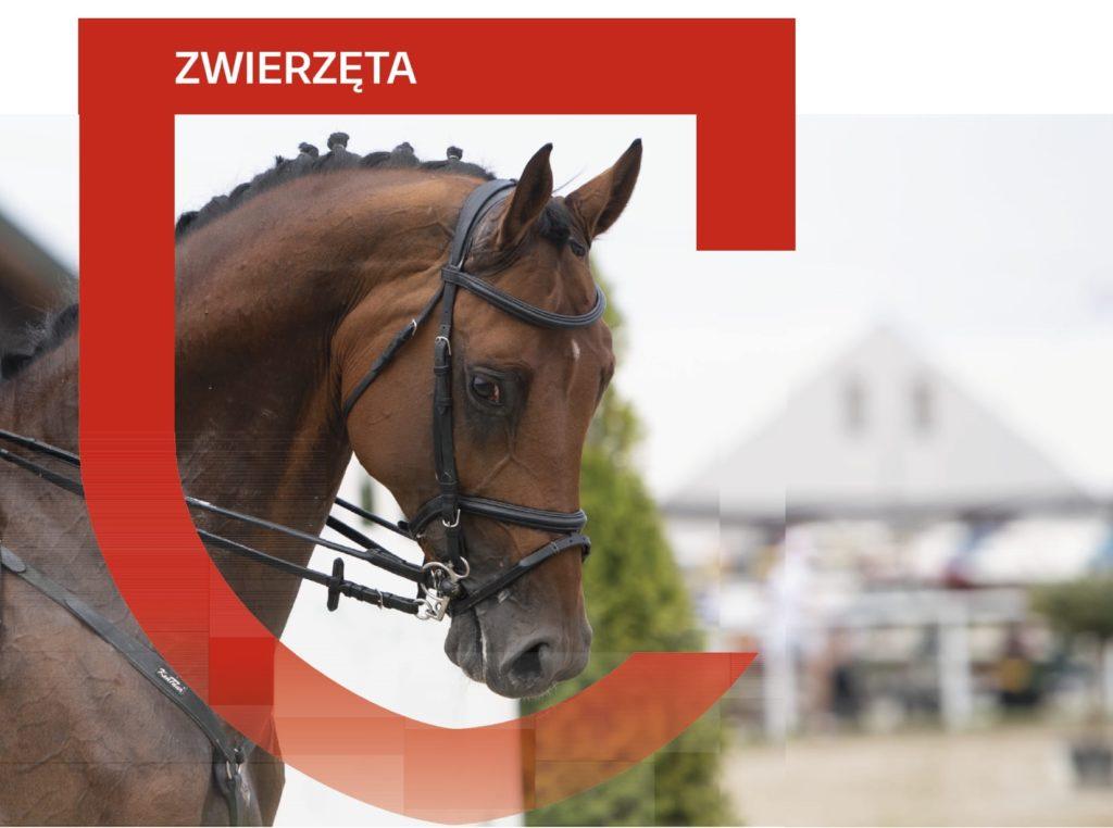 Concordia - ubezpieczenie dla koni - grafika